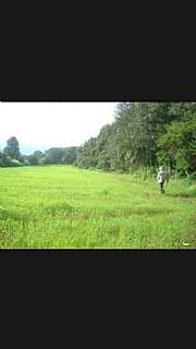 Terreno residencial en Poligono 4, s/n. 7 hectareas de terreno con olivos almendros etc
